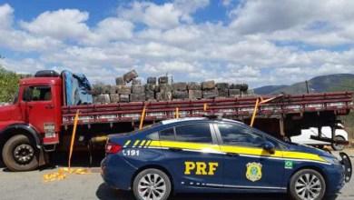 Photo of #Bahia: PRF apreende três toneladas de maconha em trecho da BR-116 no município de Jequié