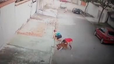 """Photo of Vídeo: Criança é salva de ataque de pitbull por jovem no Rio de Janeiro; """"Tive que agir. Foi automático"""""""