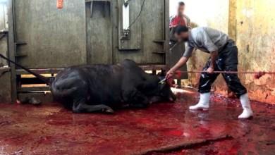 Photo of #Polêmica: Congresso Nacional é pressionado a não aprovar exportação de animais vivos do Brasil