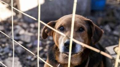 Photo of #Salvador: Lei que pune com pena administrativa prática de maus tratos a animais já está em vigor