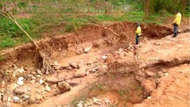 Photo of Chapada: Prefeitura de Itaetê em parceria com brigadistas realiza plantio de mil árvores no município