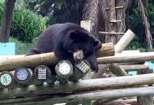 Photo of #Bahia: Zoológico de Salvador pode receber visitas de grupos no período da noite; saiba como agendar