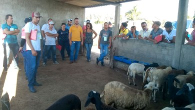 Photo of Chapada: Ação visa aumento da produção de ovinos e caprinos e maior renda para agricultor familiar em Pintadas