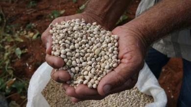 Photo of IBGE estima safra de 8,6 milhões de toneladas de grãos em 2020 na Bahia