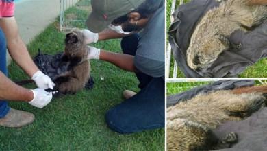 Photo of #Chapada: Primata nativo de Mata Atlântica em risco de extinção é resgatado pela Cippa entre Seabra e Lençóis