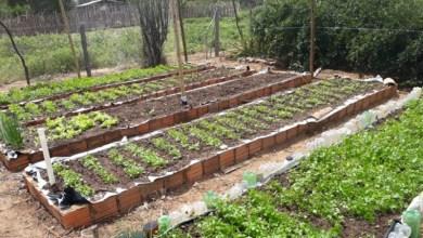 Photo of #Bahia: Estrutura para que o campo não pare de produzir é garantida pelo governo estadual