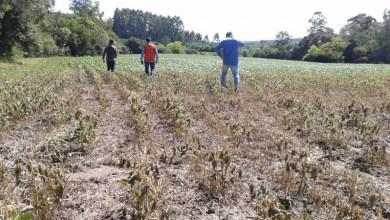 Photo of #Brasil: Produtores rurais de municípios afetados pela seca podem renegociar financiamento