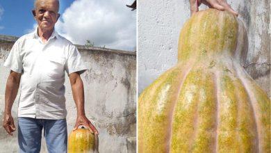 Photo of #Chapada: Agricultor colhe abóbora de 30 quilos no município de Piritiba e vira notícia