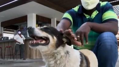 Photo of #Bahia: Cachorro que espera dono sair de hospital em Feira de Santana há três anos vira atração do local