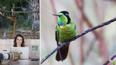 Photo of #Vídeos: Bióloga divulga diversidade de aves da Chapada Diamantina ao vivo por meio de sua rede social