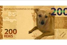 Photo of #Brasil: Banco Central já estuda ação contra maus-tratos a animais após petição para vira-lata caramelo estampar nota de R$200