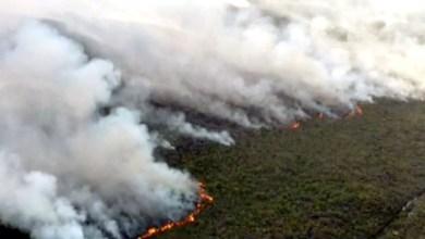 Photo of #Chapada: Incêndio na região entre Andaraí e Mucugê completa quatro dias; há indícios de ação criminosa