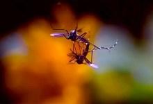 Photo of #Brasil: Pesquisa da Fiocruz Pernambuco confirma transmissão sexual do zika vírus