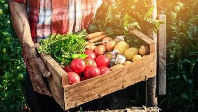 Photo of #Chapada: Sebrae em Irecê realiza evento com foco em capacitação e acesso a mercado para produtor rural