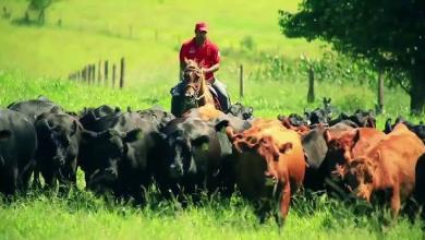 Photo of #Bahia: Justiça obriga Inema a retomar licenciamento ambiental das atividades agrossilvapastoris no estado