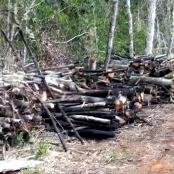 Área de cerca de 7 hectares é encontrada desmatada em Ibicoara - Foto - Reproducao-TV Bahia 2