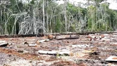 Photo of #Chapada: Sete hectares desmatados de área de proteção ambiental são localizados em Ibicoara