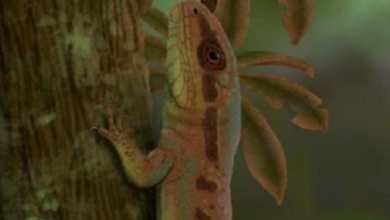 Photo of #Brasil: Nova espécie de réptil é registrada no Piauí e pesquisadores afirmam que o animal viveu antes dos dinossauros