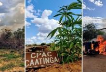 Photo of #Chapada: Policiais militares usam drone para identificar plantação e erradicam 30 mil pés de maconha em Campo Formoso