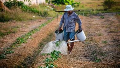 Photo of #Chapada: Projeto lança portal de informação com assuntos e experiências sobre agroecologia para a região