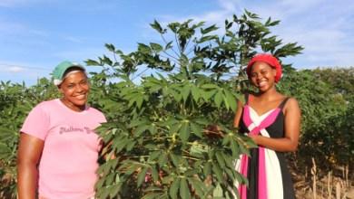 Photo of #Bahia: Mulheres rurais mostram força do trabalho da agricultura familiar e estado garante políticas públicas