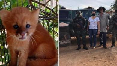 Photo of #Chapada: Filhote de onça é localizado por agricultores e resgatado pela Cippa-Lençóis em João Dourado