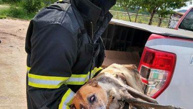 Photo of #Chapada: Bombeiros resgatam cadela ferida e debilitada em canal de esgoto no município de Itaberaba