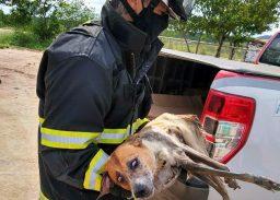 O resgate durou aproximadamente quinze minutos   FOTO: Divulgação/SSP-BA  