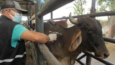 Photo of #Bahia: Governo sinaliza que deve vacinar mais de 10 milhões de animais contra a febre aftosa até o final de maio