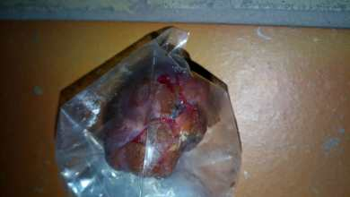 Photo of #Chapada: Pedaço de carne com chumbinho jogado para matar animais de rua é novamente encontrado em Rio de Contas