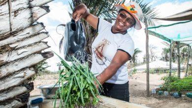 Photo of #Bahia: Garantia-Safra é pago a cerca de 215 mil agricultores que aderiram ao programa no estado baiano