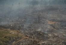 """Photo of #Brasil: Após Câmara aprovar PL da Grilagem, entidades ambientais afirmam que """"Senado precisa impedir retrocesso"""""""