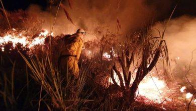 Photo of #Chapada: Prefeitura de Utinga pede que população denuncie queimadas e salienta que se trata de crime ambiental
