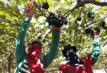 Photo of #Bahia: Agricultura gerou R$27,5 bilhões para o estado em 2020, melhor resultado em 26 anos