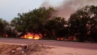 Photo of #Bahia: Área de vegetação é atingida por incêndio no sul do estado; fogo chegou perto de reserva indígena