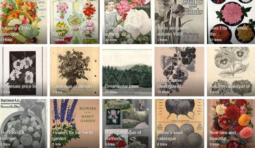 imagem-botanica