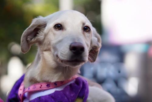 adote-cachorro-instituto-santo-pet
