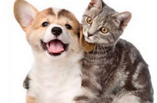 Teresópolis volta a realizar o censo animal para castração gratuita de cães e gatos