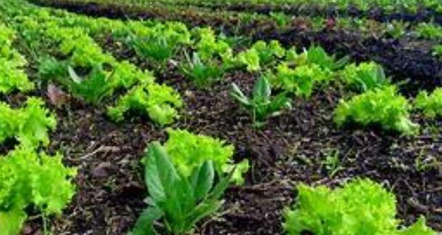 Convênio vai beneficiar produtores rurais do Estado do Rio de Janeiro
