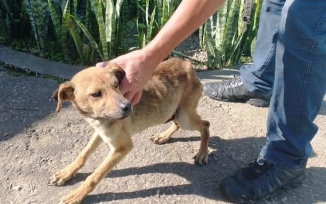 COPBEA resgata 3 cães e dono recebe voz de prisão por crueldade animal