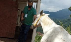 Teresópolis abre licitação para o serviço de captura e guarda de animais soltos em vias públicas