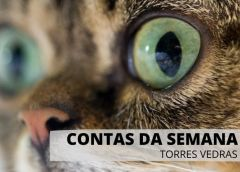 Contratos da Câmara Municipal de Torres Vedras – Semana de 14 a 18 de setembro