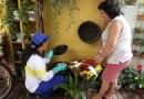 Paraná não registra mortes por dengue há 14 meses