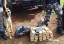 Guarapuava: PM e a Policia Civil encontram 25,8 Kg de maconha enterrada com ajuda de cães