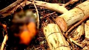 Homem tem cabeça esmagada por tora de árvore durante derrubada