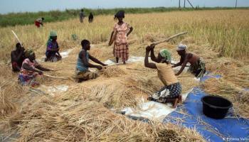 Lei de terras Mocambique
