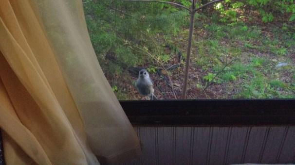 A little bird friend persistently kept me company.