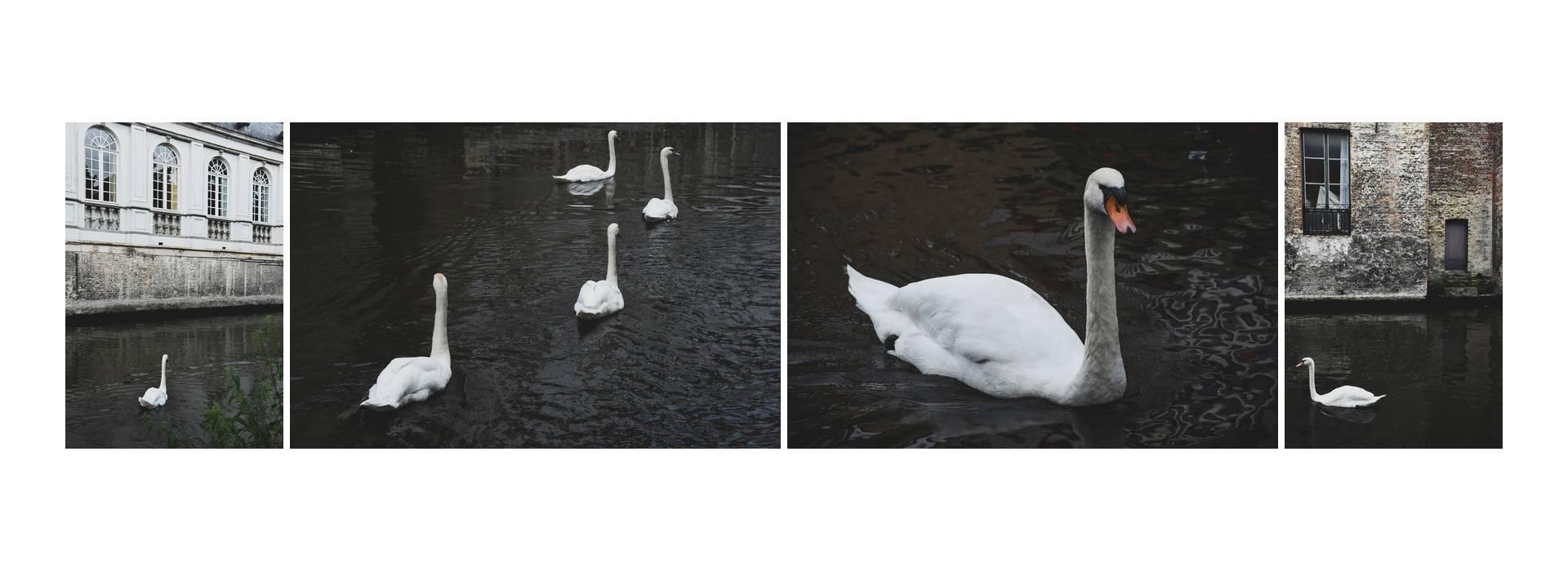Live your Life - Brujas - Los cisnes