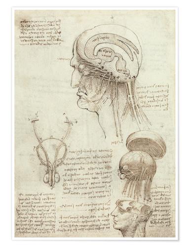 La óptica según Leonardo Da Vinci - José Álvarez Fotografía