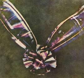 Tartan Ribbon. La primera fotografía a color de la historia